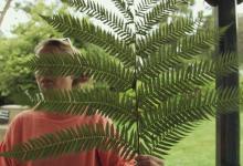 Dom and the fern, Trengwainton. Photo © Barbara Santi.