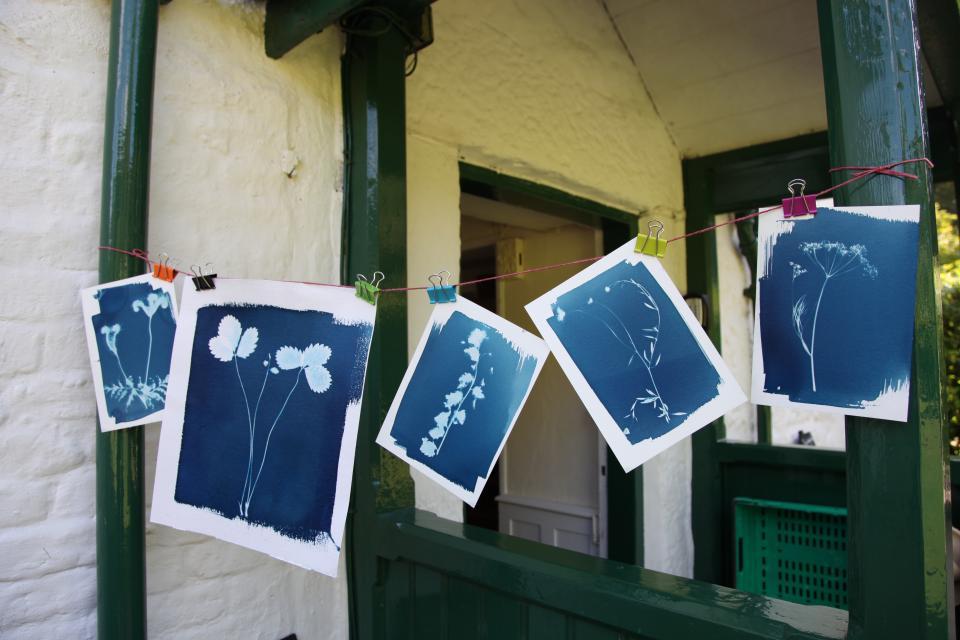 Making cyanotypes at The Gardener's Cottage. Trengwainton Garden