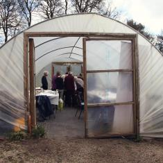 The polytunnel, Trengwainton botanical illustration Spring course