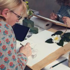 Ros drawing a Camelia, Trengwainton botanical illustration Spring course