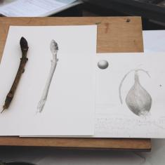 Drawings by Billy Burman, Trengwainton botanical illustration Spring course
