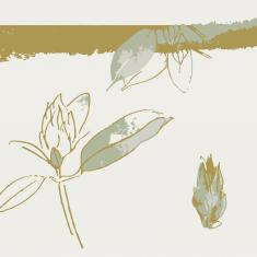 Sketches of Rhododendron 'christmas cheer'. Image © Dominica Williamson
