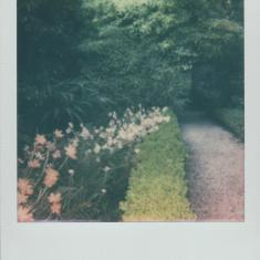 Walled garden, Trengwainton