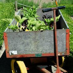Gardener's trolley, Trengwainton.