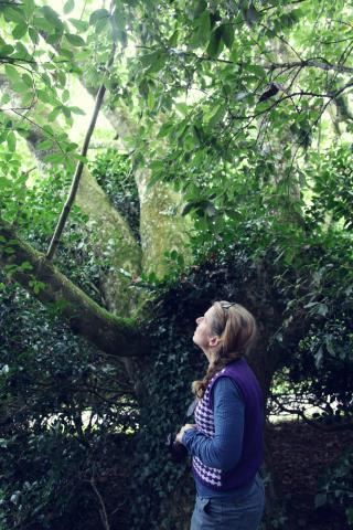 Dom under the trees, Trengwainton Drive